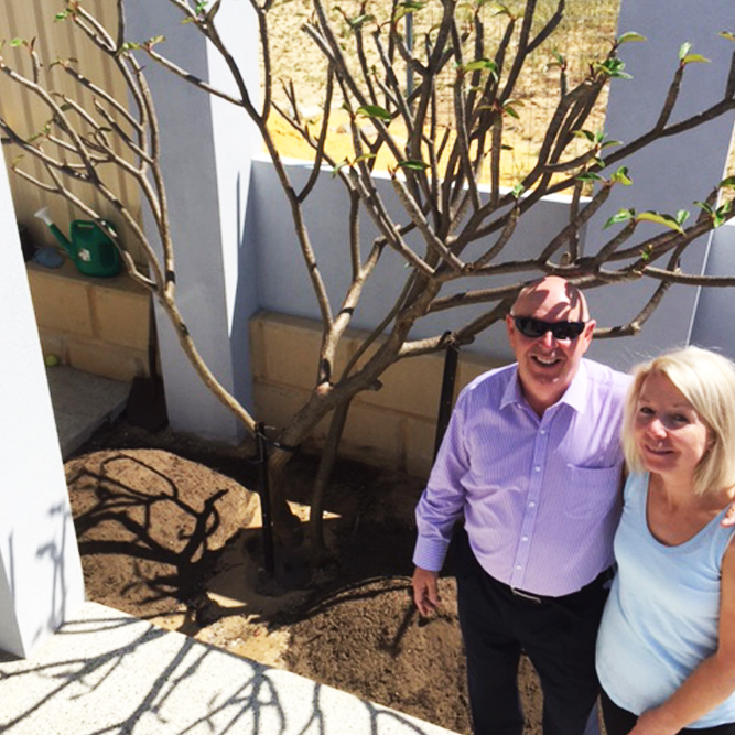 gr8glass pool fencing perth free frangipani winners